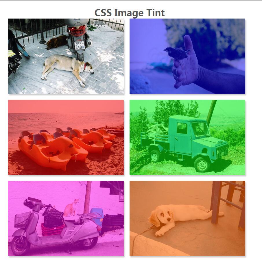 css3图像阴影鼠标悬浮色调变化动画样式代码